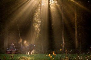 Strijklicht in de bossen.