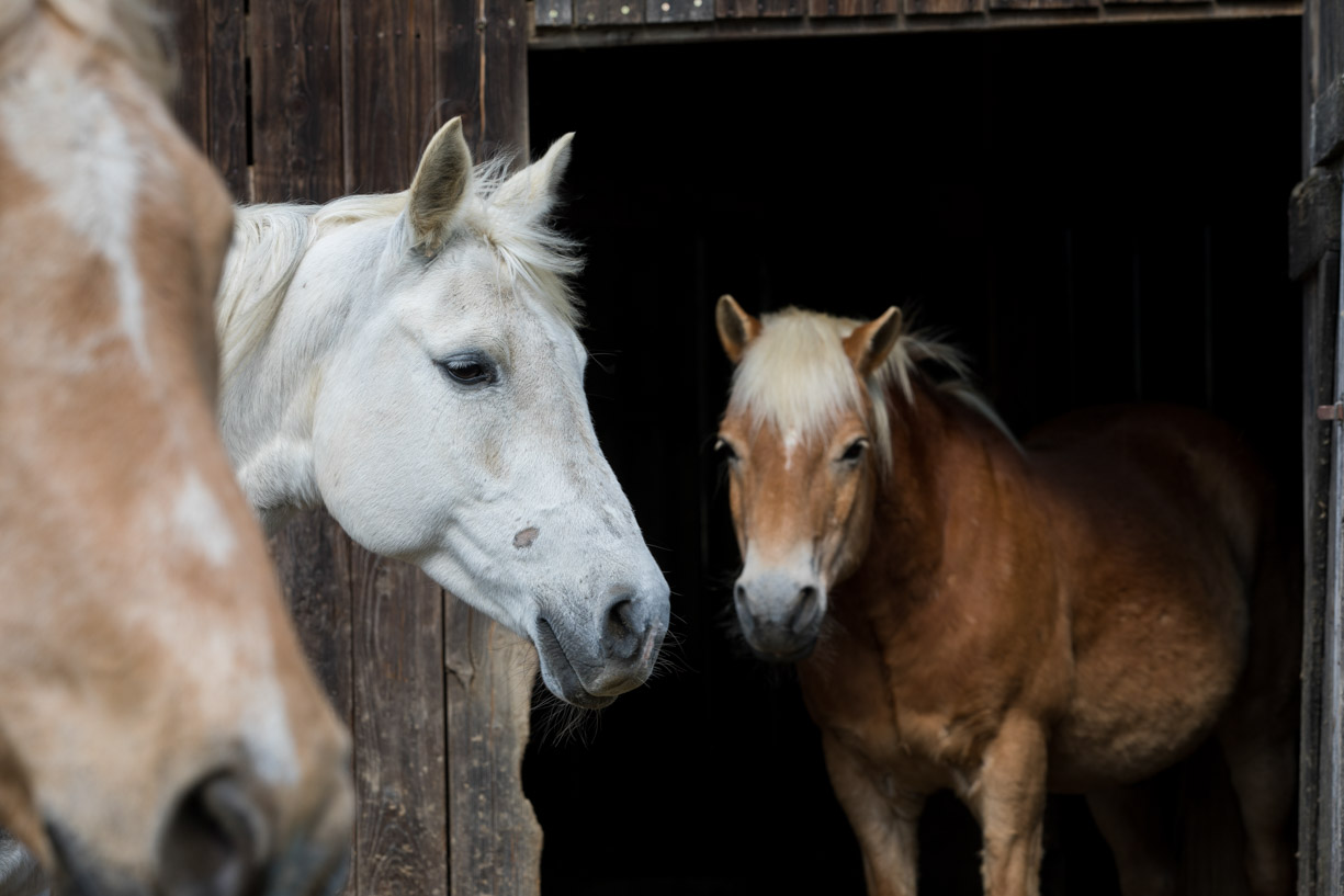 Fotoshoot met paarden