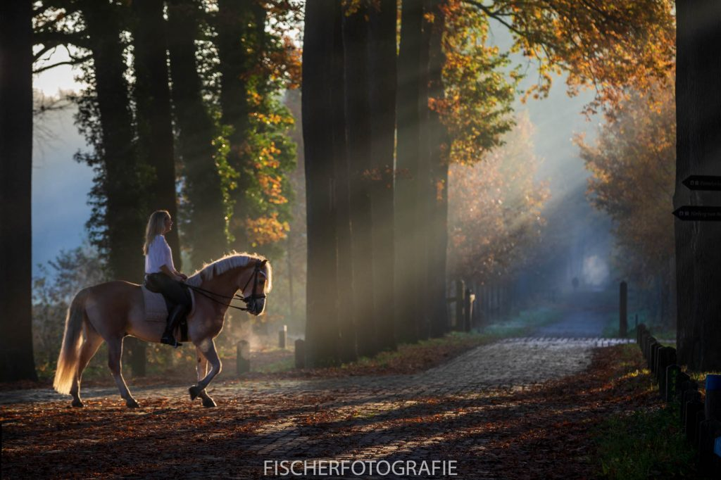 Horse riding, like a painting.