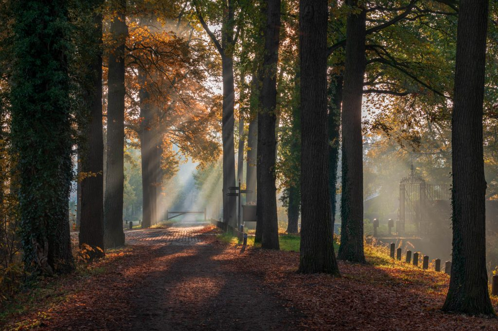 Sprookjesachtige ochtend met herfstkleuren en zonnestralen.